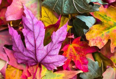 Colour Pop: Best places for Autumn Leaves...