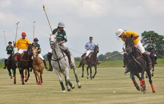 Learn Polo as a Family at one of Price Harry's clubs
